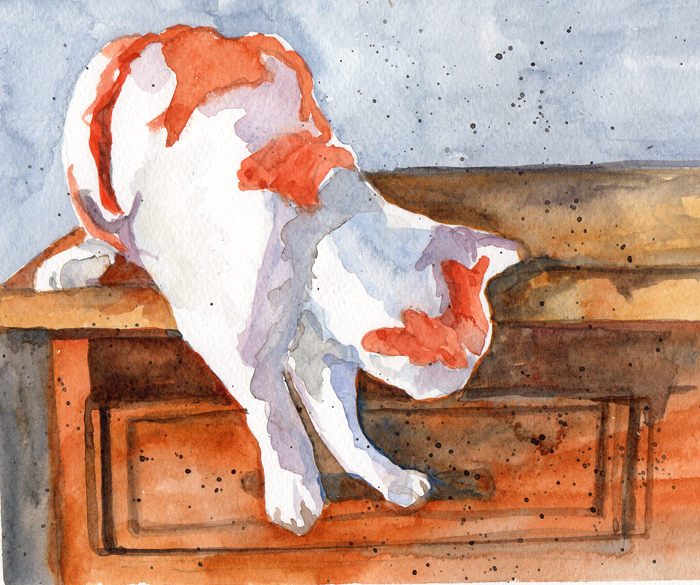 orange and white cat opening a drawer